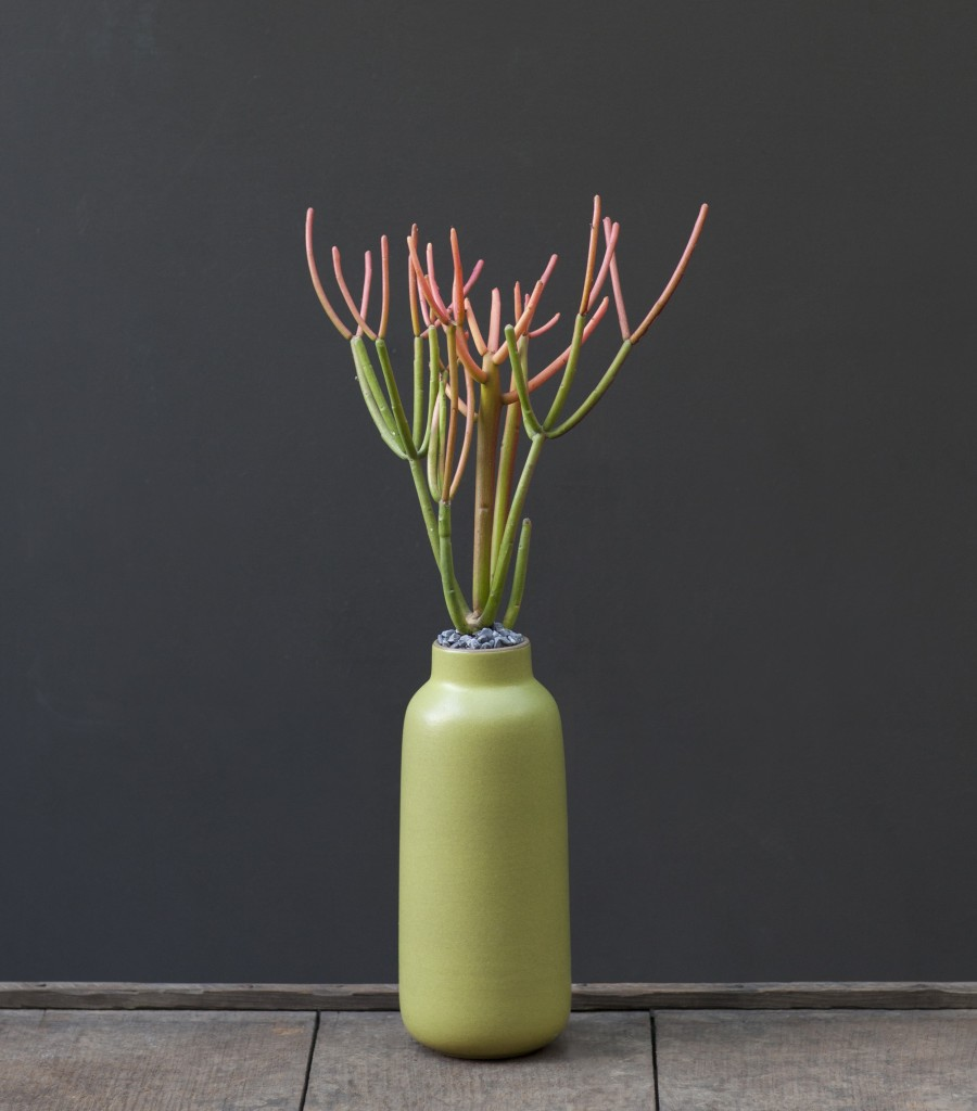 95_Euphorbia Recipe 1