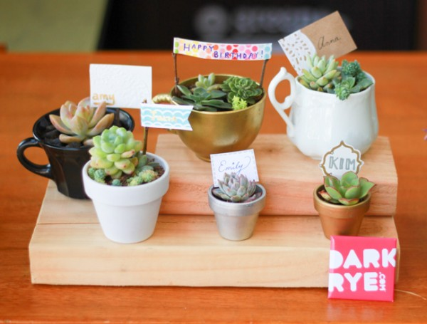 Cute succulent arrangements in cups