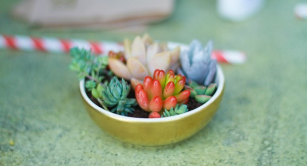 Succulents in dishes