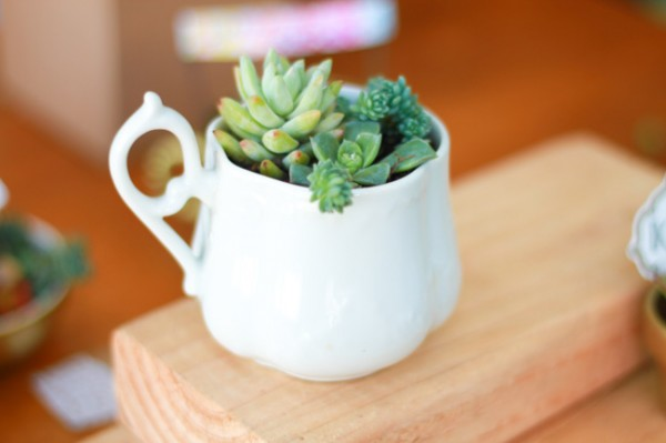 Thrift store dishes upcycled into cute succulent planters!