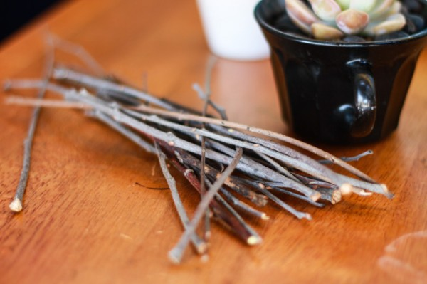 Twigs for succulent name tags