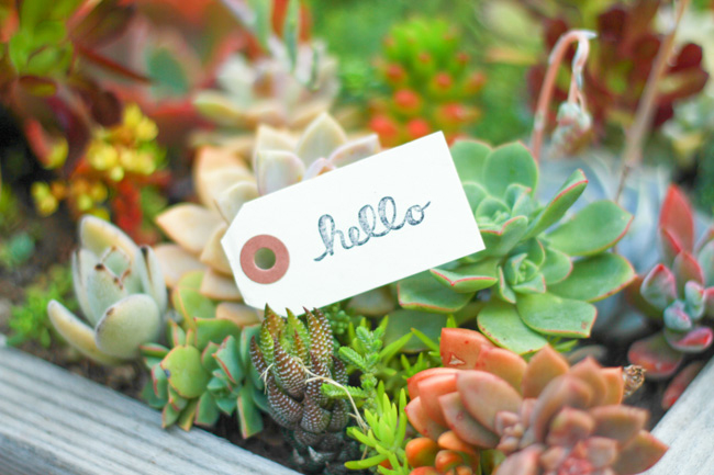 Cute hello tag in succulent planter