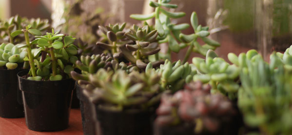 Mason Jar Terrarium succulents - at Crafternoon!