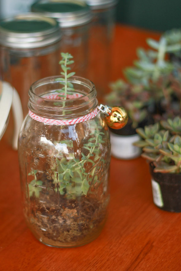 Mason Jar Terrarium DIY at Whole Foods