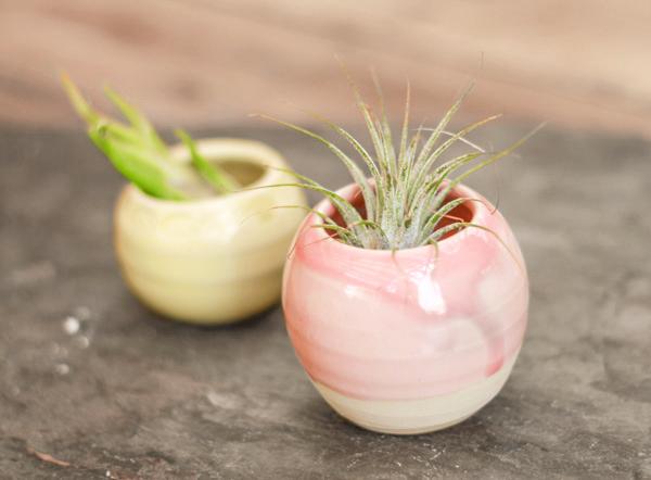 succulentpot